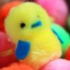 Pom-Pom Chick